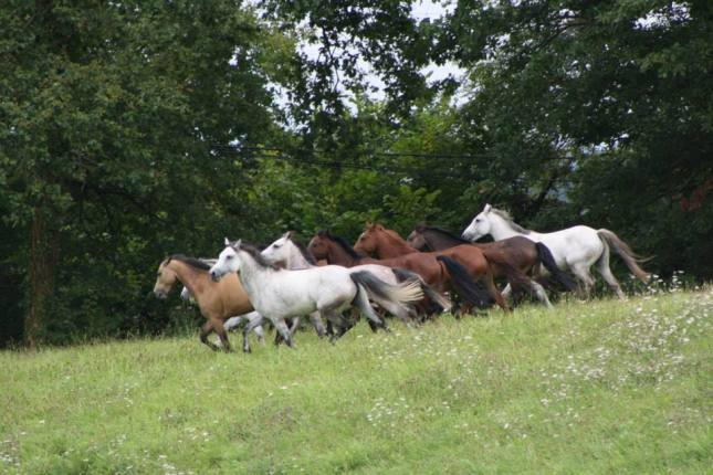 pré poneys .