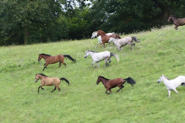 pré poneys